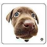 Photo of Allsop Chocolate Lab Mouse Pad